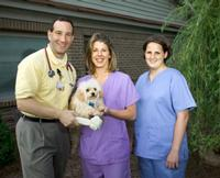 Veterinarians and Your Necessary Qualities
